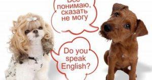 kak uchit slova na anglijskom1